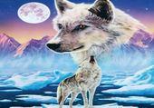loup sur une banquise