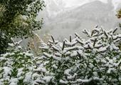 fleurs .... de neige