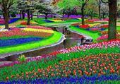 pelouse coloré
