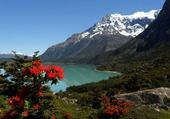 Fleurs et Montagne