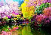 lac et arbres