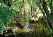 riviere a truite
