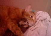 Mes bébés chats