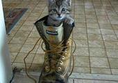 chat au travail