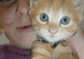 glossy mon petit chat