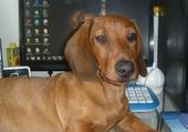 Rocky au bureau