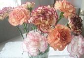 jolis oeillets en bouquet