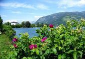 Fleurs au bord du lac