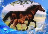 chevaux heureux