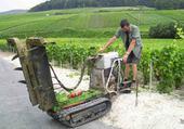 le travail des vignes