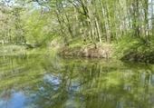 Reflets d'étang