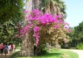 Puzzle Jardin botanique Cadix