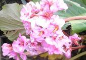 fleur par HG