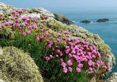 Fleurs maritimes
