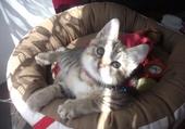 mon chaton rose