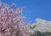 Puzzle Mont Lachat  et prunus