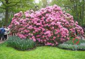 Enorme buisson de fleurs