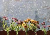 Puzzle Fleurs sous la pluie