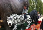 nahil et le tigre