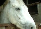 le cheval d'amour