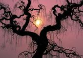 Tree on a purple sky