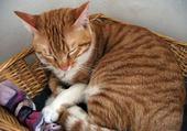 chat roux  RANTANPLAN