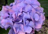 Puzzle fleur perlee