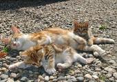 chatons et leur maman