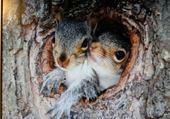 l'écureuil attent le printemps