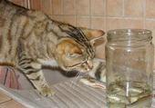 Puzzle chat et poissons
