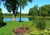 Soleil sur l'étang