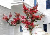 maison grecque par h