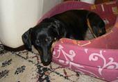 tina qui dort