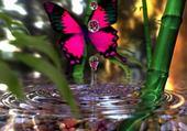 Puzzle belle nature