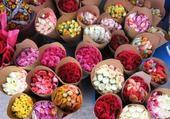 fleures 1rabi