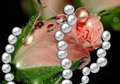 fleure perle