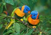 Puzzle oiseaux sur la branche