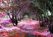 Sous Bois Nuancés Roses