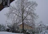Puzzle tilleul sous la neige