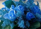 fleurs bleues par h