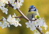 Vivi le printemps