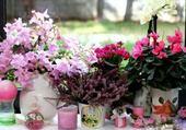 Assortiment de fleurs