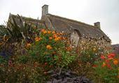 Derrière les fleurs..une maison