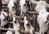 Les vaches de Santa Fé