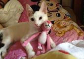 picco le chat de sab