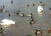 lac de Remiremont