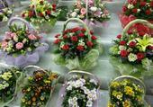 Puzzle bouquets aux femmes