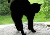 Puzzle Chat noir
