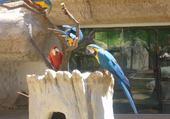 Puzzle les perroquets de la palmyre