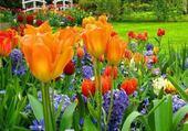 jardin printanier